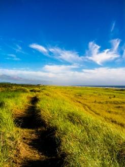 Walk the open road