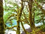 Rainforest meets lake