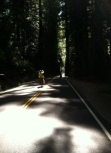 Ave of the Giants